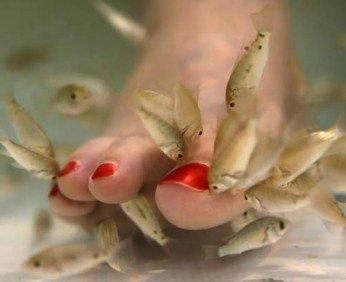 Педикюр рыбками
